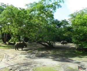 Rinocerontes em um momento um pouco tenso...