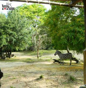 Mais zebra.