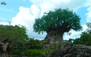 animal kingdom 49