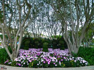 Flower and Garden Festival.