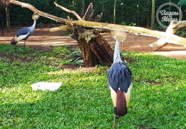 parque das aves 10