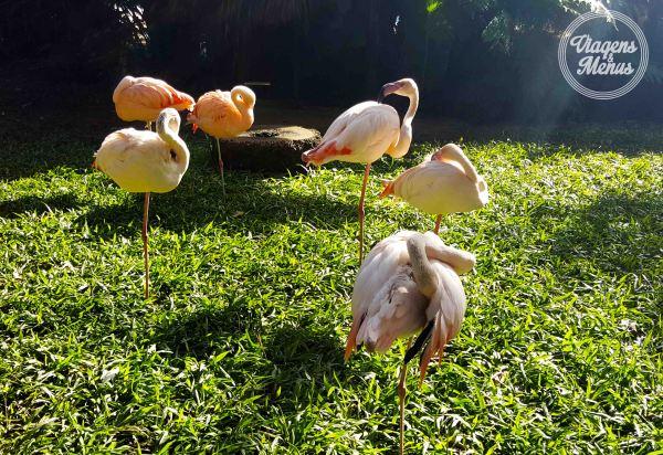 parque das aves 12