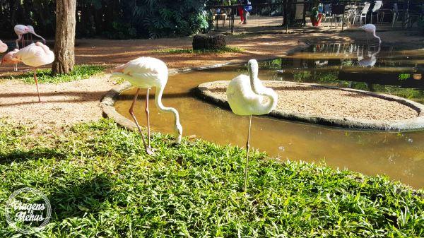 parque das aves 13