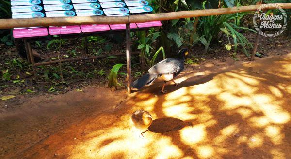 parque das aves 19