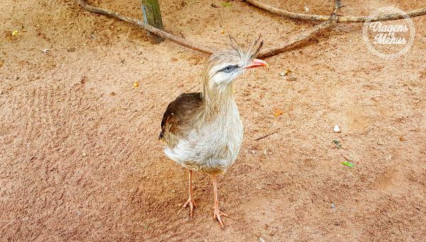parque das aves 21