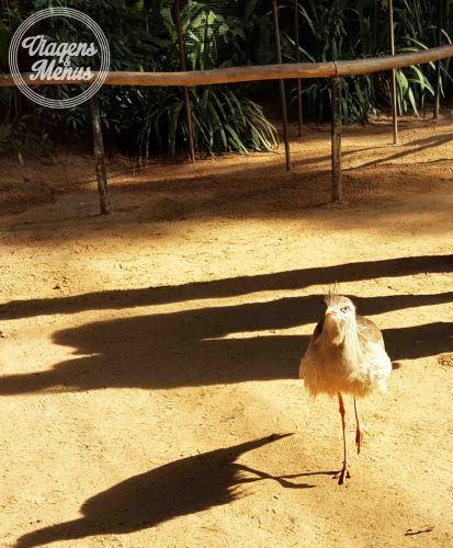 parque das aves 31