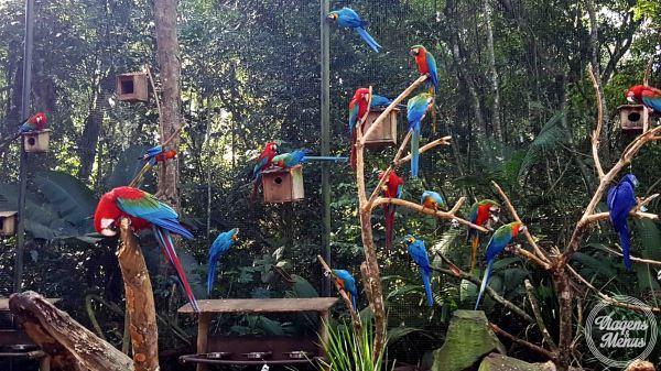 parque das aves 32