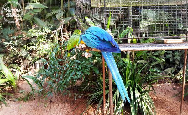 parque das aves 35