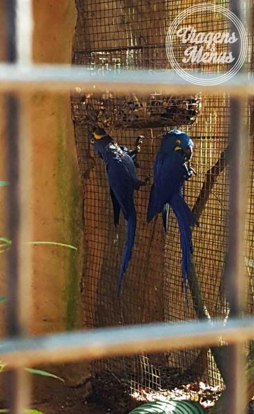 parque das aves 7