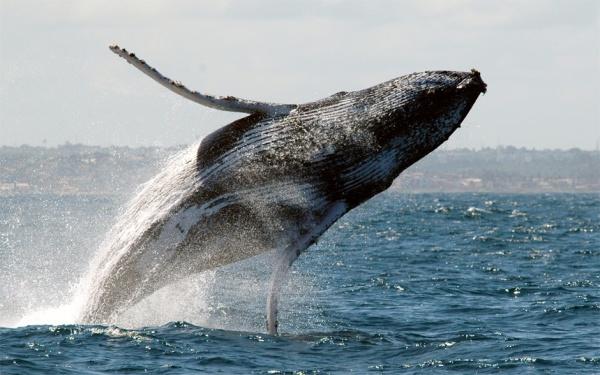 baleia-2