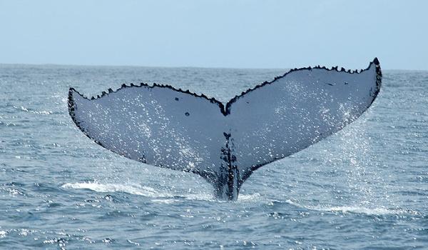 baleia-3