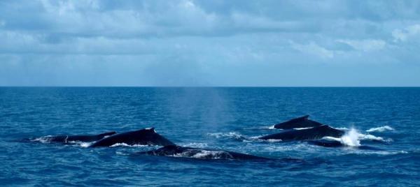 baleia-4