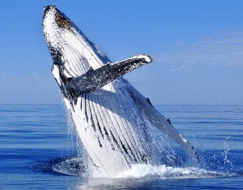 baleia-5