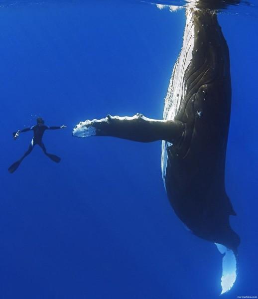 baleia-6