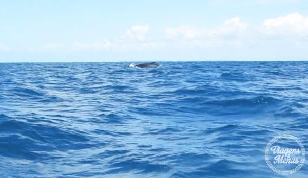 passeio-baleia-16