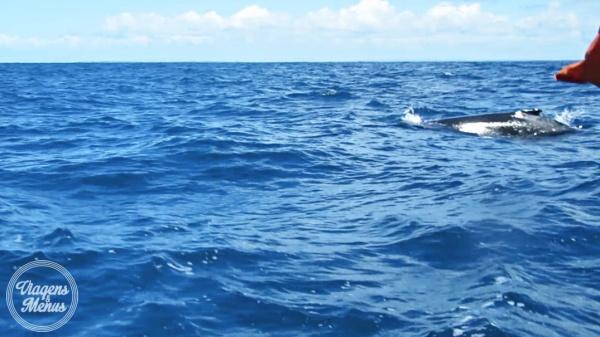 passeio-baleia-17