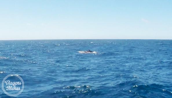 passeio-baleia-18