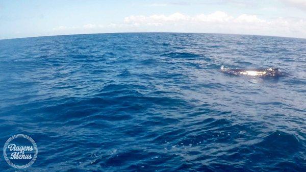 passeio-baleia-19