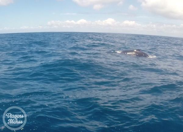 passeio-baleia-20